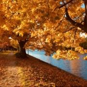 Die drei besten Herbstspaziergänge in Stuttgart